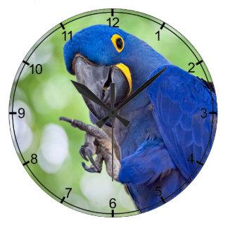 HyacintMacawfågel Stor Klocka