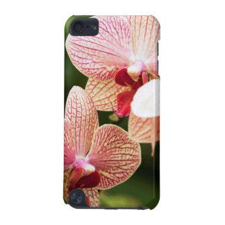 Hybrid- orange Orchid, Sydafrika