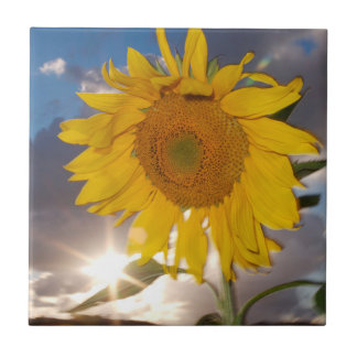 Hybrid- solros som blåser i vinden på skymningen kakelplatta