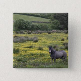I westerna Irland stativ för en häst i ett ljust Standard Kanpp Fyrkantig 5.1 Cm