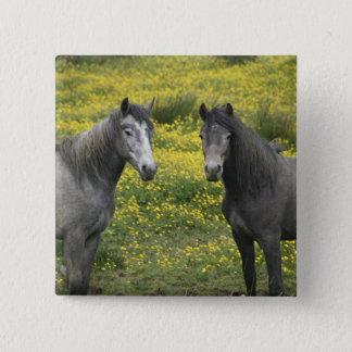 I westerna Irland två hästar med long Standard Kanpp Fyrkantig 5.1 Cm