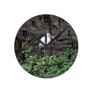 ibis anseende på busken rund klocka