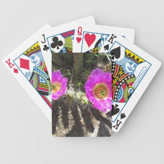 Igelkottkaktus Spelkort