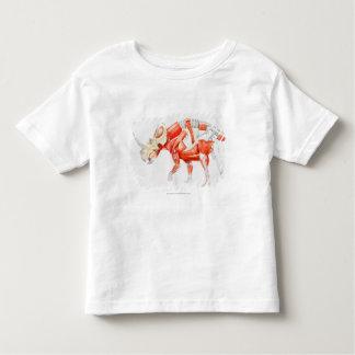 Illustration av det muskulösa systemet för t-shirt