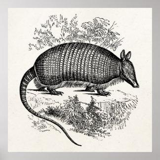 Illustration för bältdjur för vintagebältdjur poster