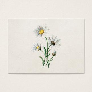 Illustration för blomma för vild för daisy för