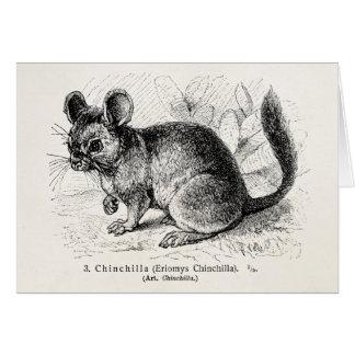 Illustration för Chinchillas för Hälsningskort