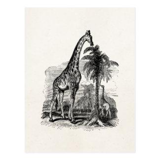 Illustration för djur för vintagegiraffpersonlig vykort