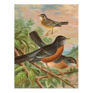Illustration för fågel för amerikanRobin vintage Vykort