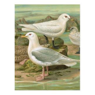 Illustration för fågel för island- och vykort