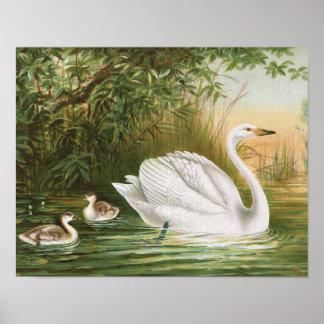 """Illustration för fågel för vintage """"för poster"""