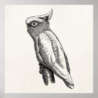 Illustration för fågel för vintagekakadua tropisk poster