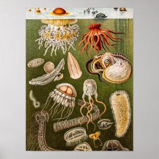 Illustration för fisk för gelé för vintagemanet poster