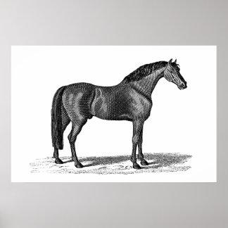 Illustration för häst för vintage1800s arabisk - h poster