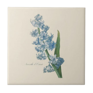 Illustration för hyacintblåttblomma kakelplatta