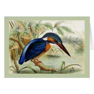 Illustration för Kingfishervintagefågel Hälsningskort