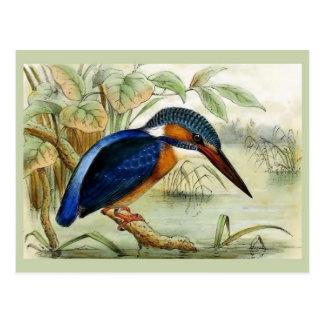 Illustration för Kingfishervintagefågel Vykort