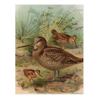 """Illustration """"för morkulla"""" vintagefågel vykort"""