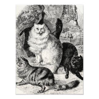 Illustration för perserkatter för 1800s för vintag fototryck