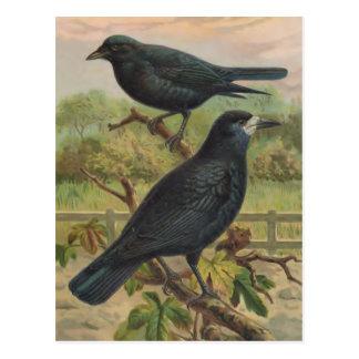 Illustration för råkavintagefågel vykort
