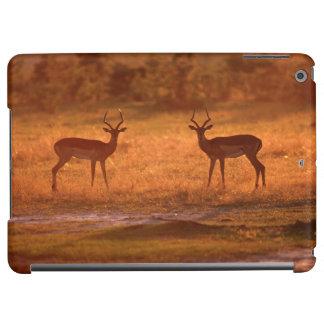 Impalaen (Aepyceros Melampus) rammar på