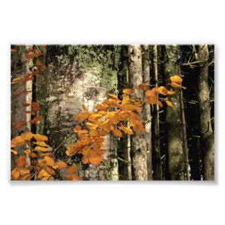 In i skogen fotokonst
