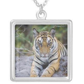 Indien Bandhavgarh nationalpark, tigerunge Silverpläterat Halsband
