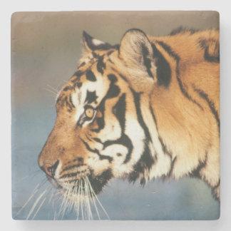 Indien Bengal tiger (pantheraen Tigris) 4 Underlägg Sten