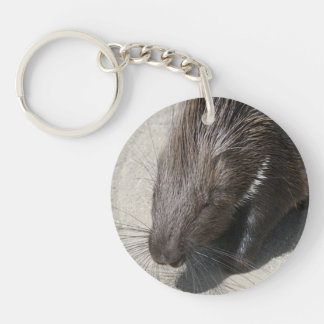 Indier krönad Porcupine