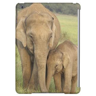 Indisk/asiatisk elefant och barn en, Corbett
