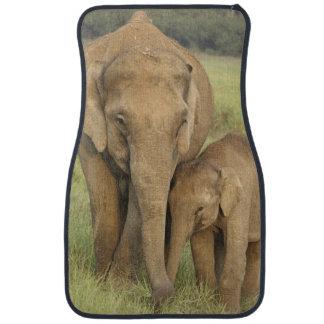 Indisk/asiatisk elefant och barn en, Corbett Bilmatta