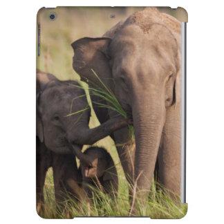 Indisk asiatisk elefantfamilj i savannahen