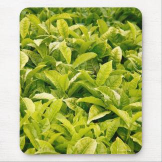 Indisk variation av tea musmatta