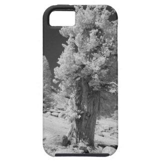 Infrarött foto i östlig sida av den Yosemite iPhone 5 Case-Mate Cases