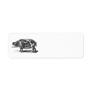 Inhemsk Hogillustration för vintage - gris 1800's Returadress Etikett