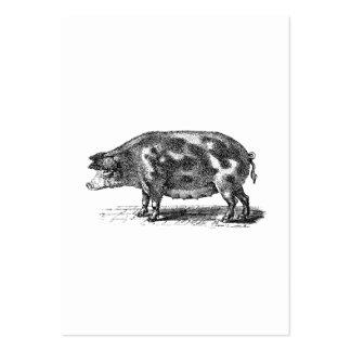 Inhemsk Hogillustration för vintage - gris 1800's Set Av Breda Visitkort