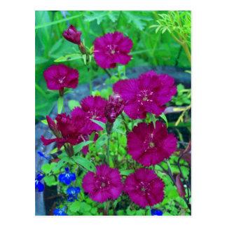 Inlagd växt vykort
