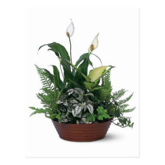 inlagda gröntväxter vykort