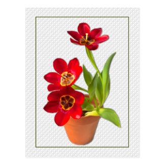 Inlagt mogna röda tulpan fotograferar vykort