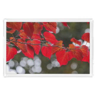 Inte för fotograferar röda löv för Jul-y Bricka