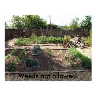Inte tillåtna ogräs! vykort
