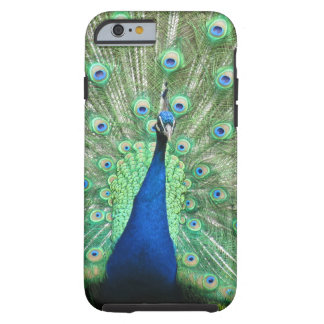 iPhone 6 - Påfågel Tough iPhone 6 Fodral