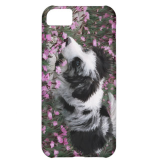 Iphone case för Collie för blåttMerle gräns iPhone 5C Fodral
