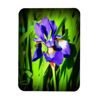 "Iris 3"" vid 4"" fotomagnet magnet"