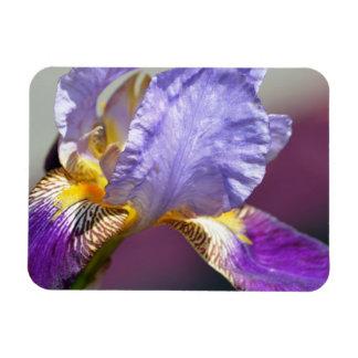 Iris i vår magnet