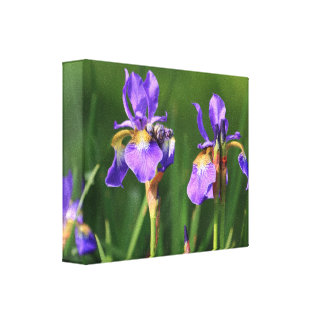 Iris slågen in kanfas canvastryck