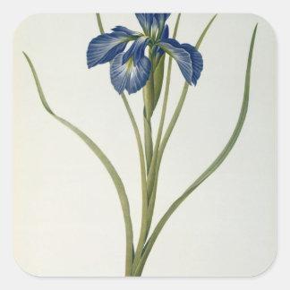 """Iris Xyphioides, från """"Les Liliacees"""", 1808 Fyrkantigt Klistermärke"""