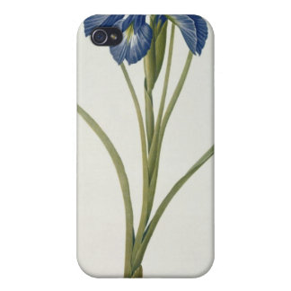 "Iris Xyphioides, från ""Les Liliacees"", 1808 iPhone 4 Cases"