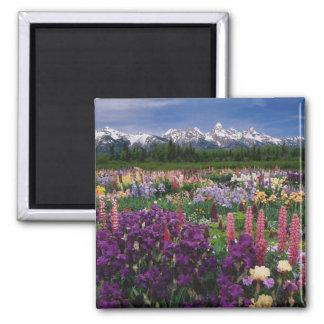 Irisen och Lupineträdgården och Teton spänner, Magnet