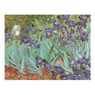 Irises av Vincent Van Gogh, vintage blommar konst Vykort